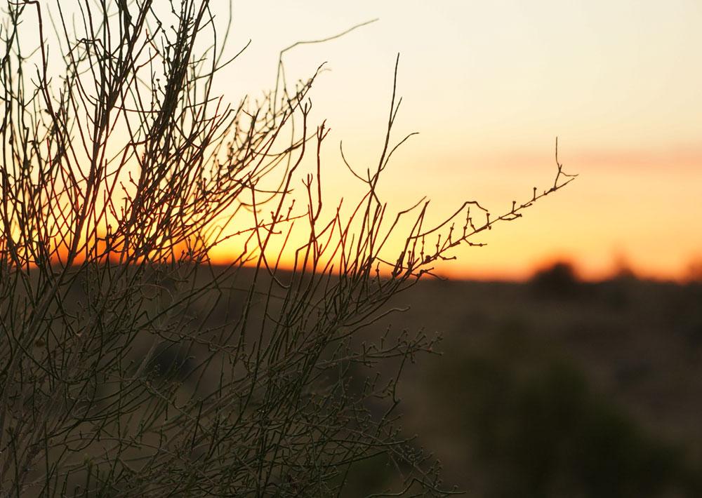 Pustynia Kyzyl Kum - wschód słońca