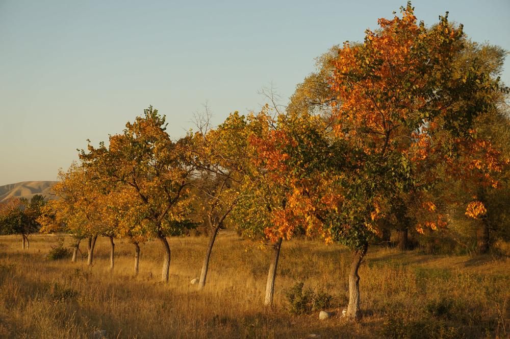 drzewka-gorki