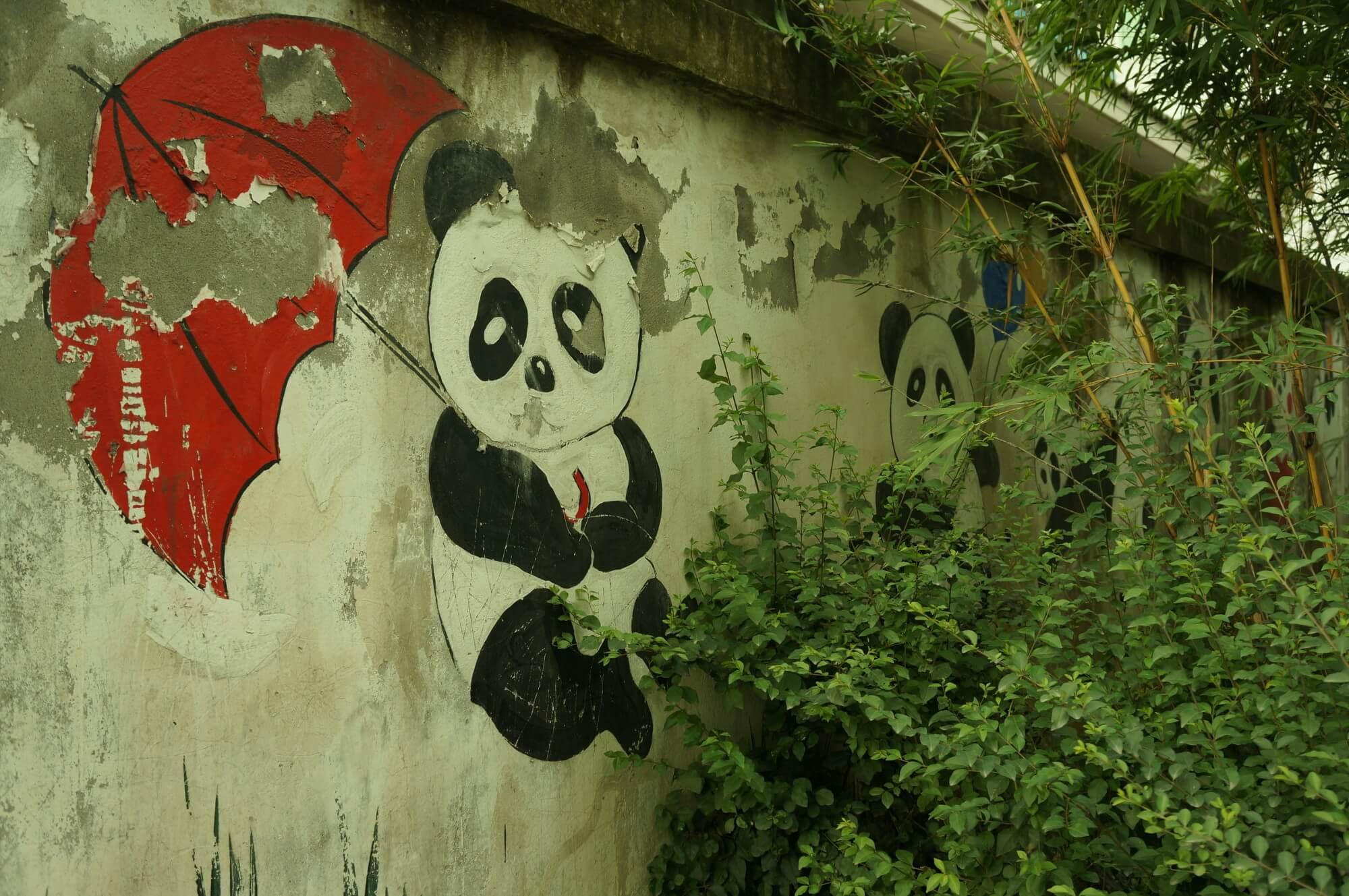 chiny_panda
