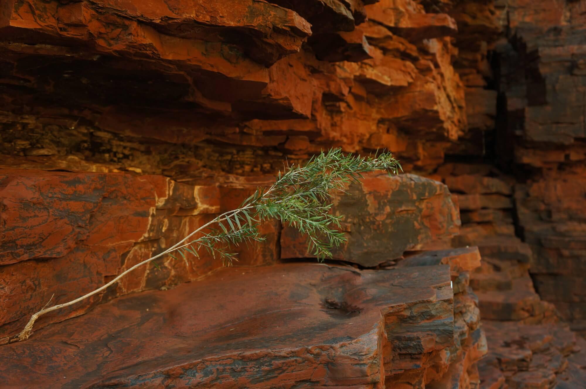 australia-zachodnia-park-narodowy-karijini-11