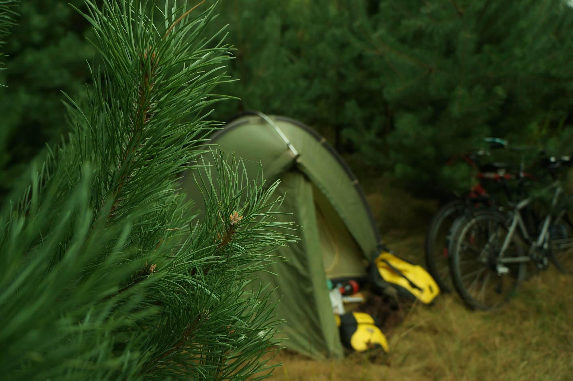namiot-w-lesie