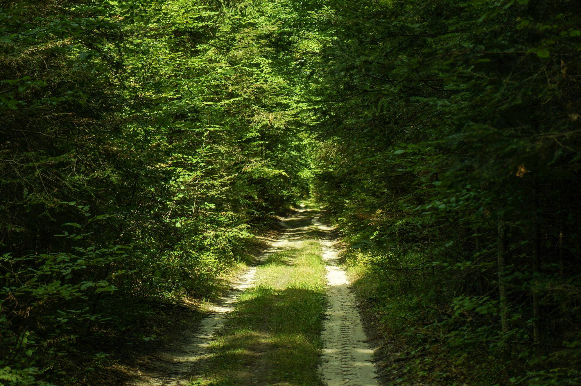 sciezka-w-lesie