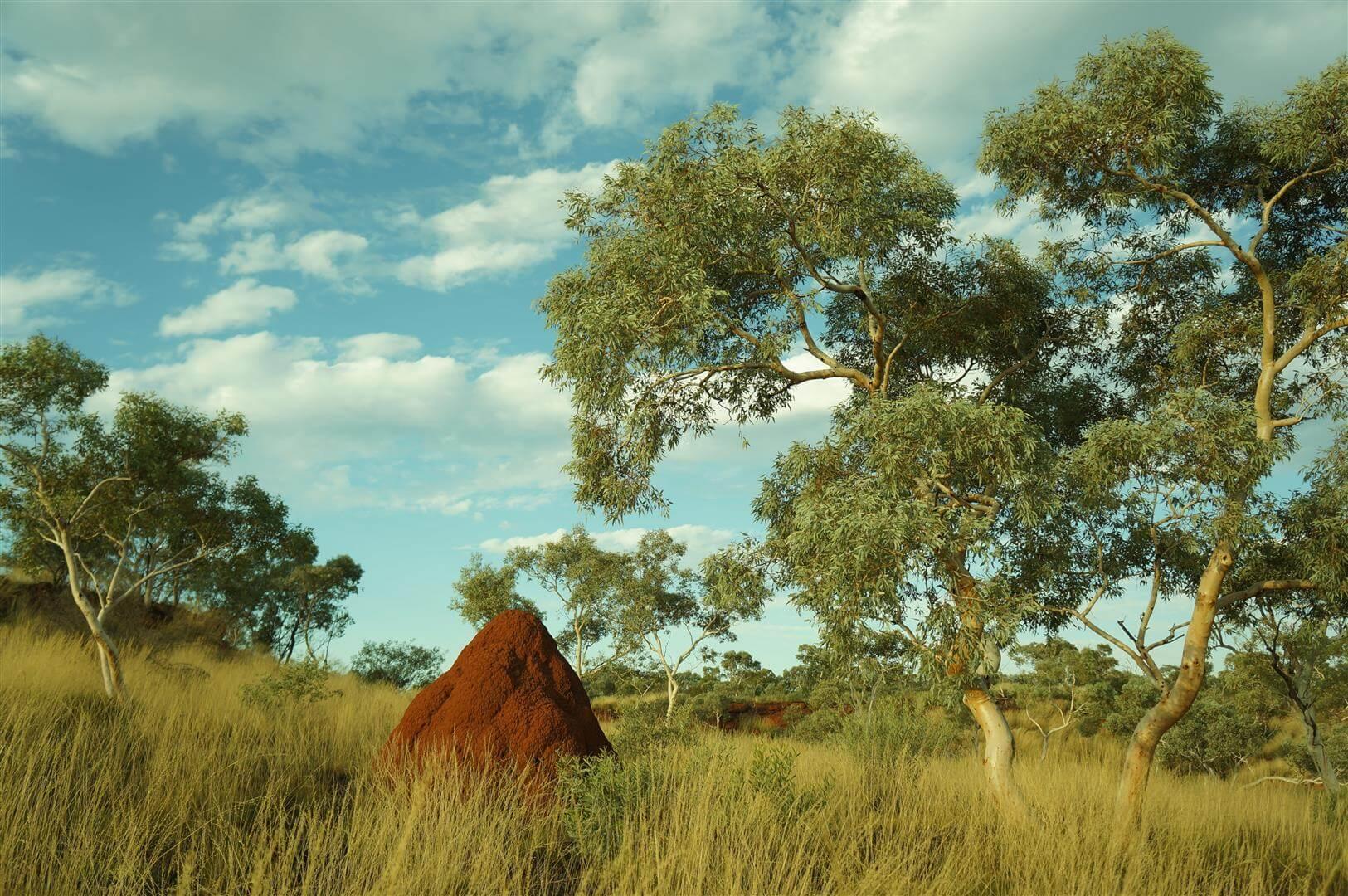 australia-busz-terminitera