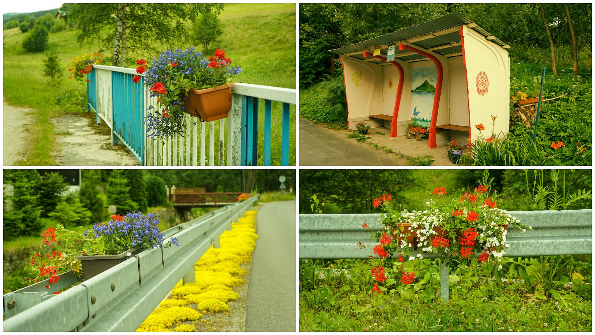 kwiaty-przystanek-dolina-klodzka