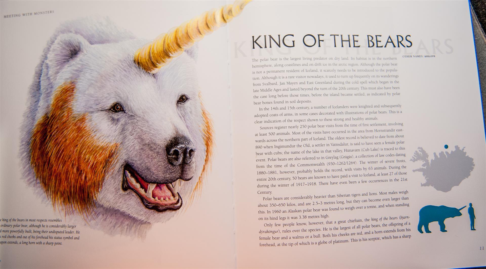 krol-niedzwiedzi-polarnych