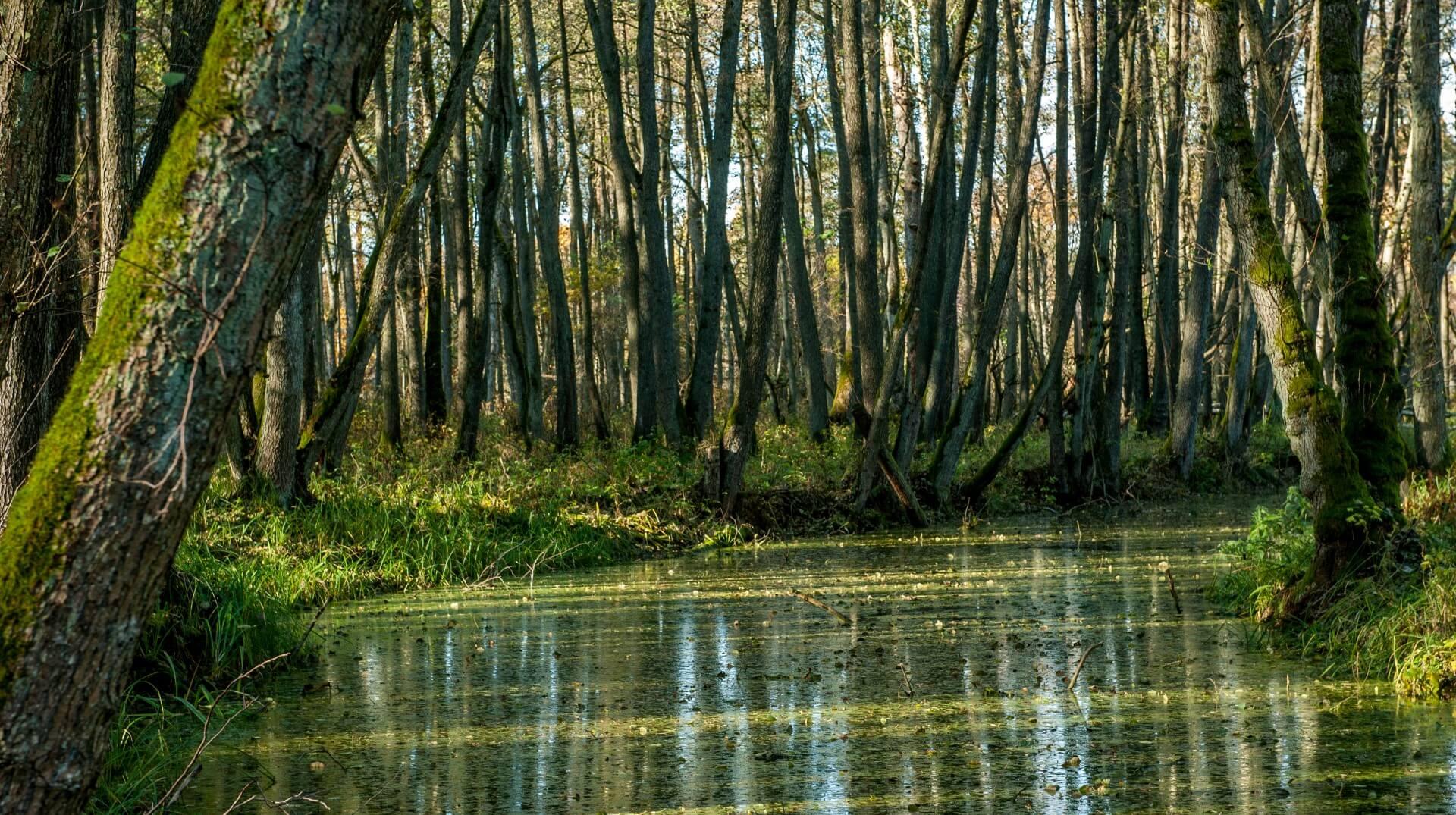 mokradla-rzeki-leby