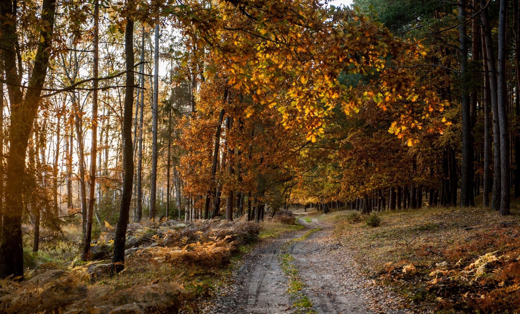slowinski-park-narodowy-jesien