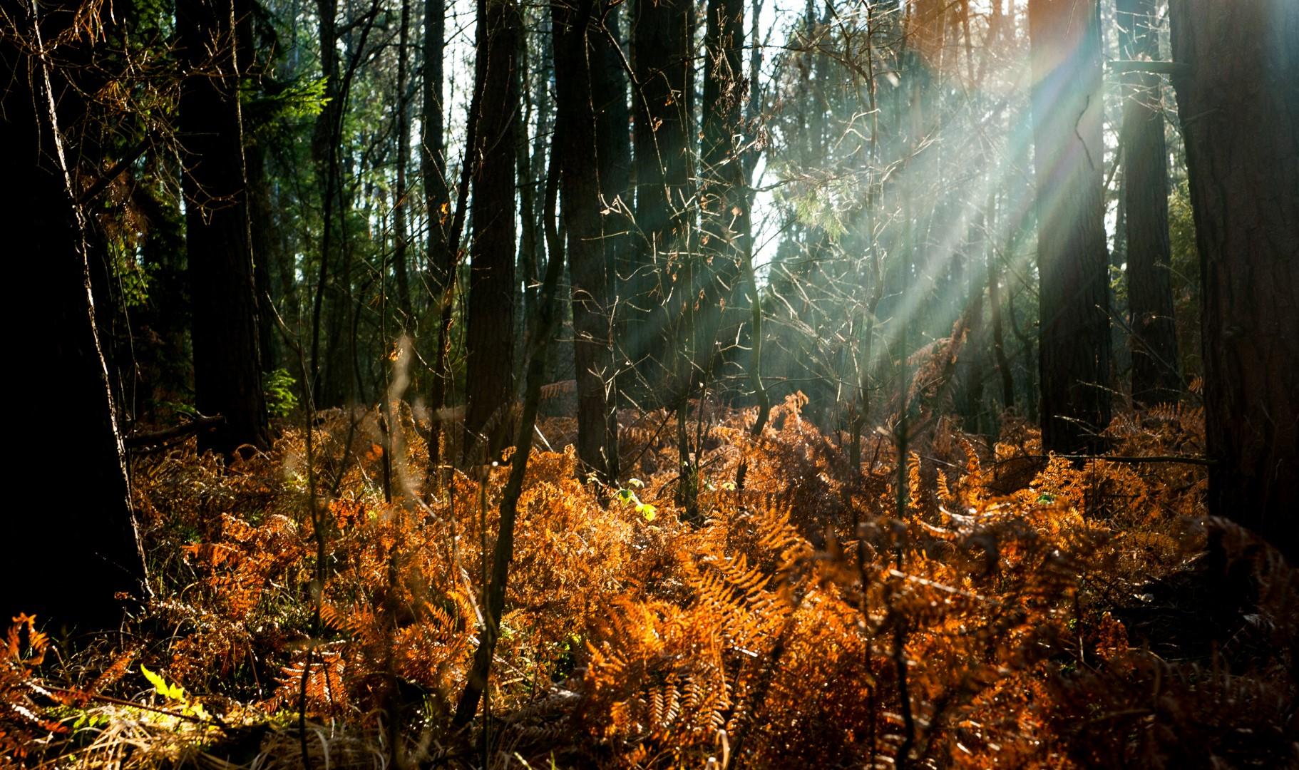 bolimowski-park-krajobrazowy-bagnisko-paprocie-last