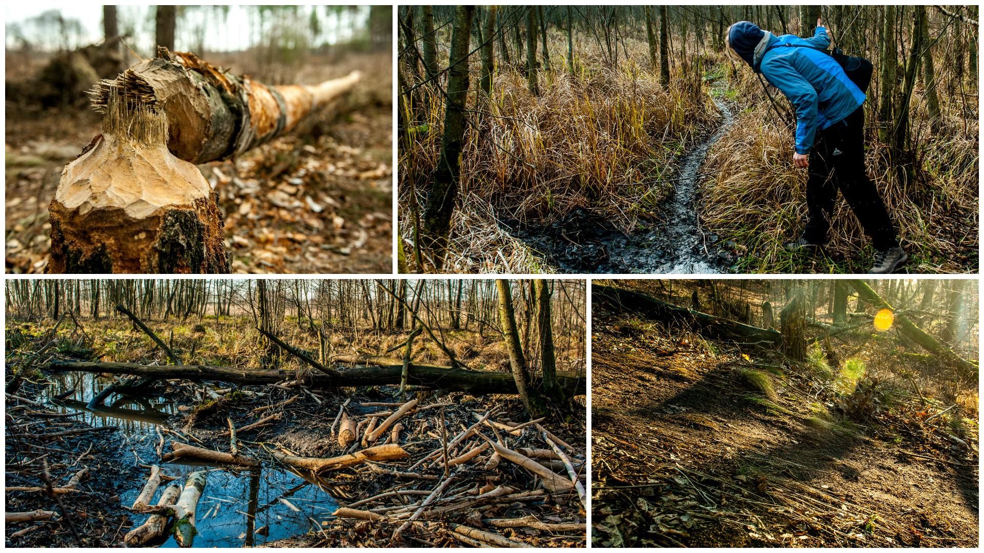 bolimowski-park-krajobrazowy-rzeka-rawka-bobry