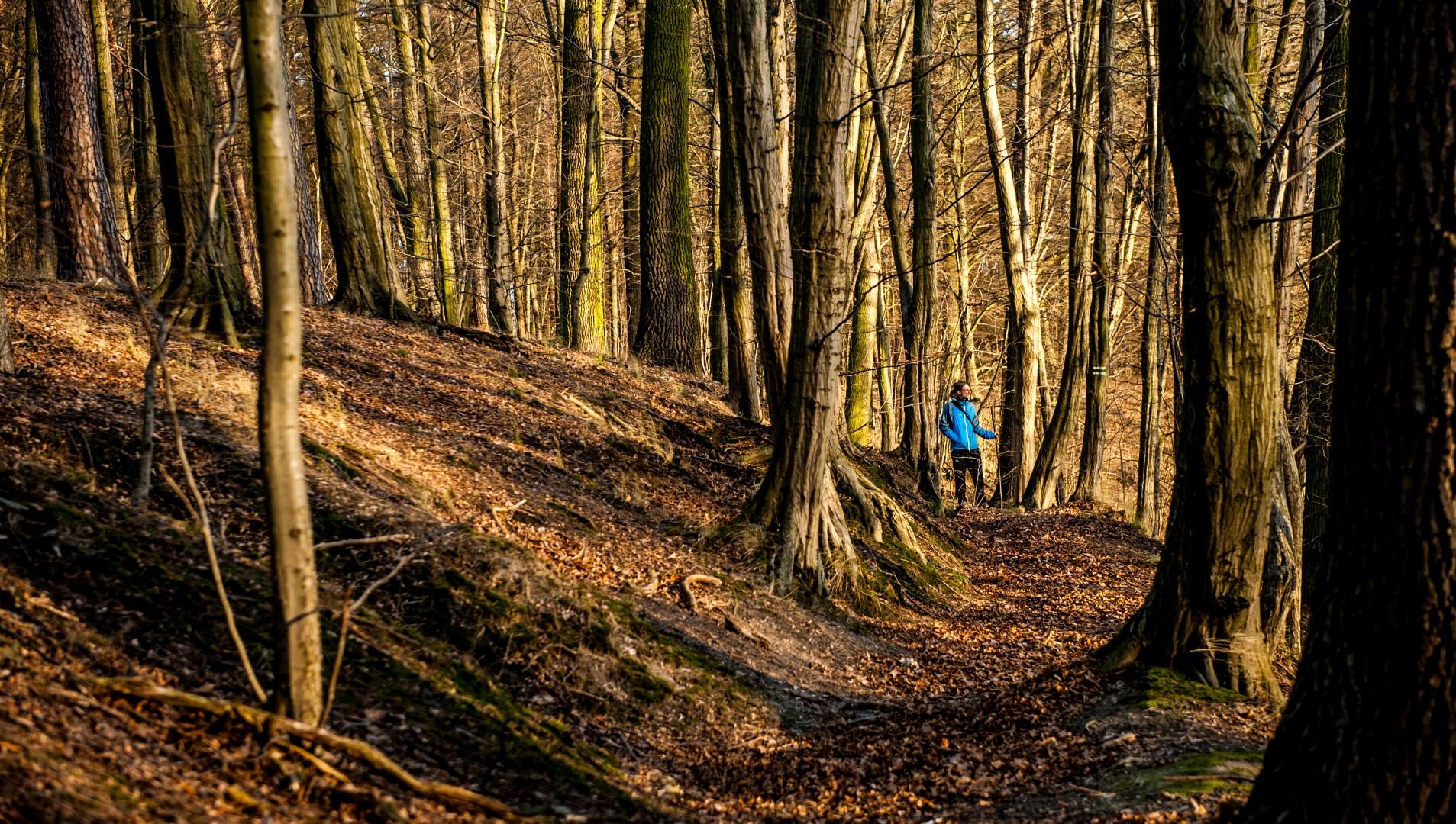 bolimowski-park-krajobrazowy-szlak-zielony