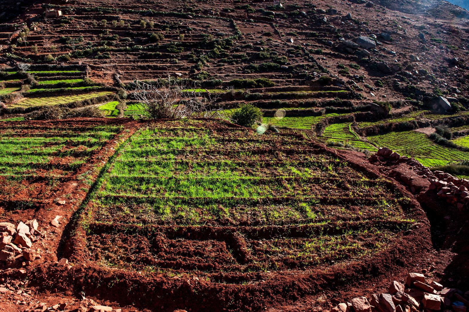 maroko-antyatlas-trekking-marrakesz-21