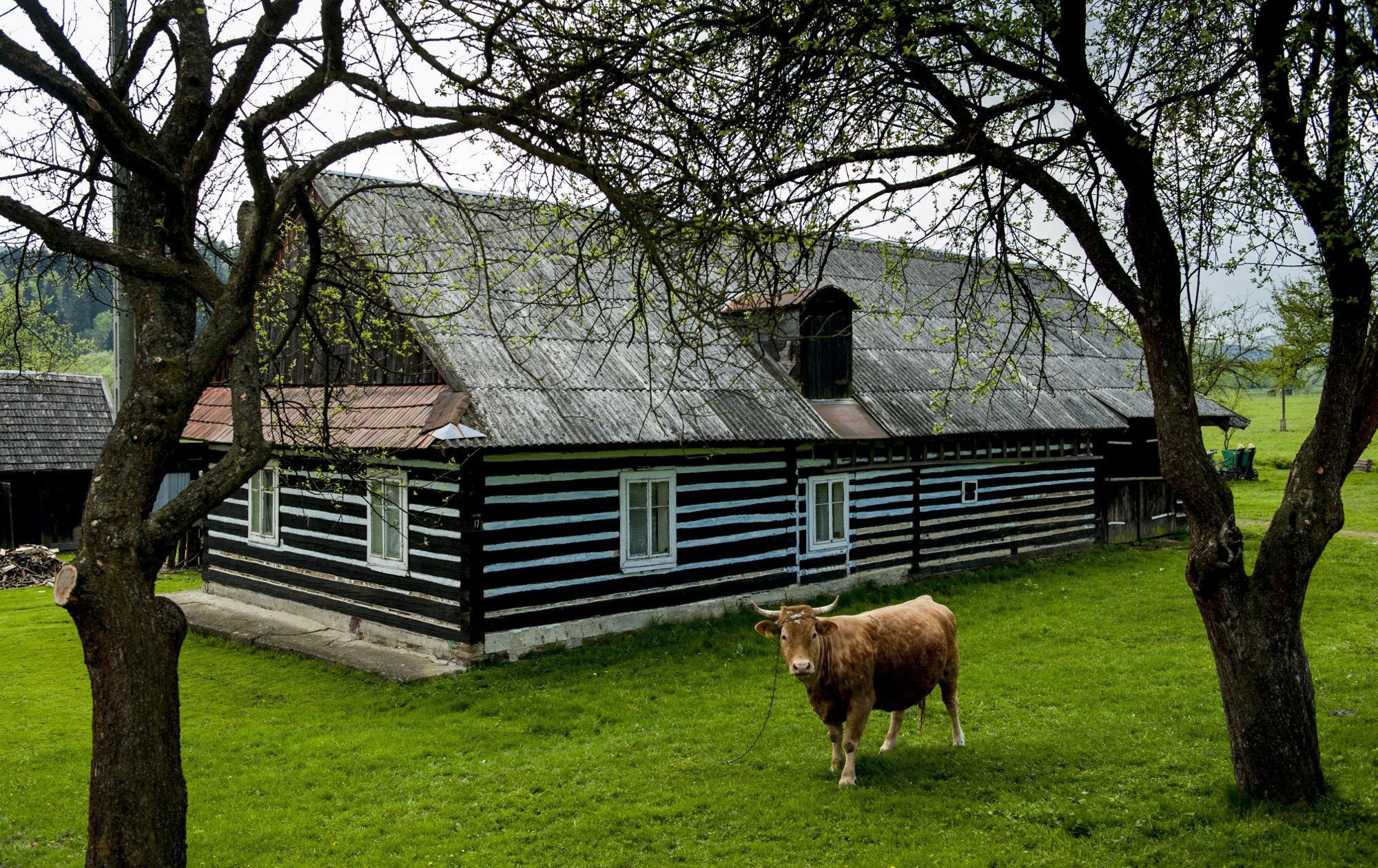 beskid-niski-chata-krowa