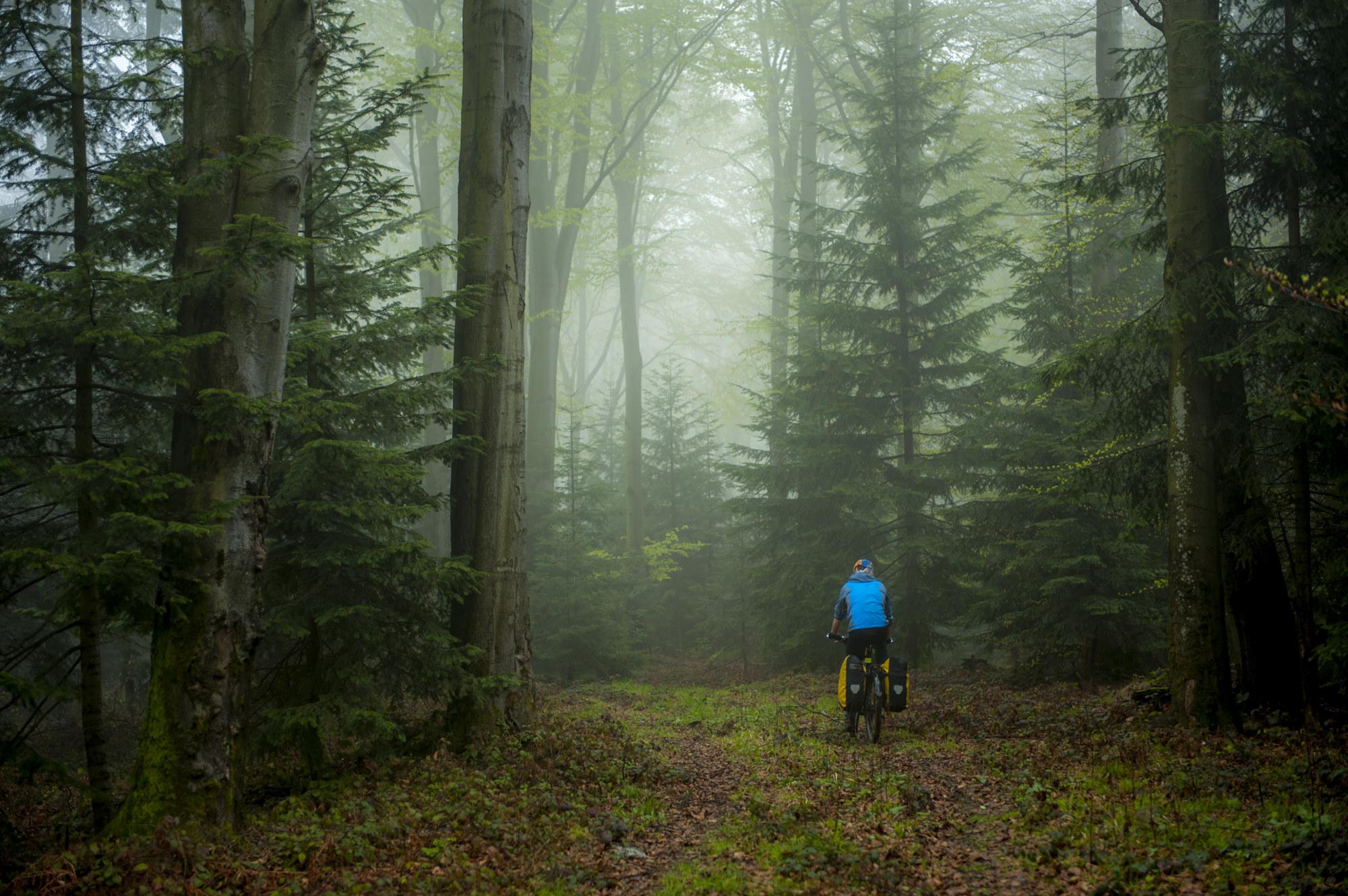 beskid-niski-rowerem-w-mroczny-las