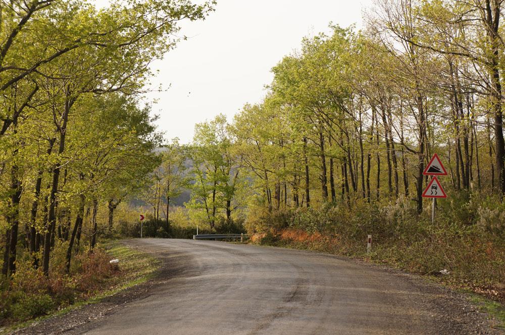 drzewa-droga