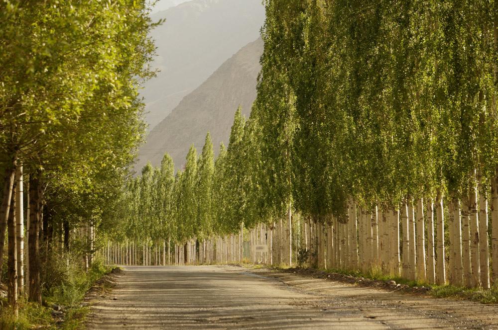 droga-drzewa