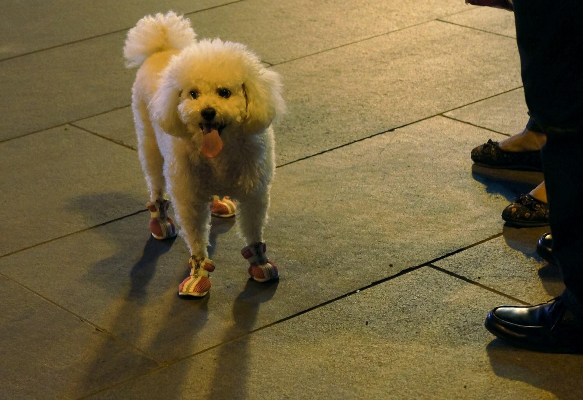 Pieski też chcą być trendy