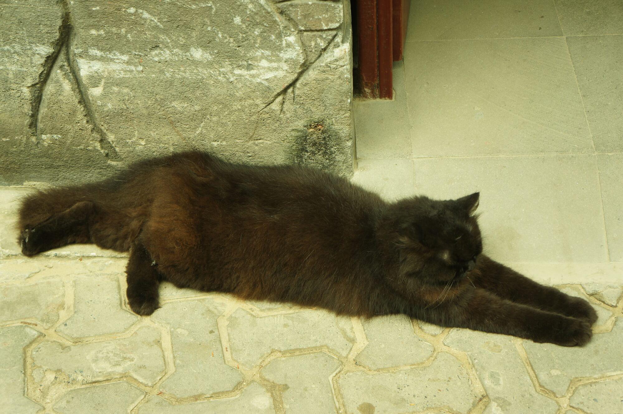 Na Phi Phi spotkaliśmy pierwsze od nie-pamiętam-kiedy grube koty. Ten rekordzistą nie jest, ale słodziak.