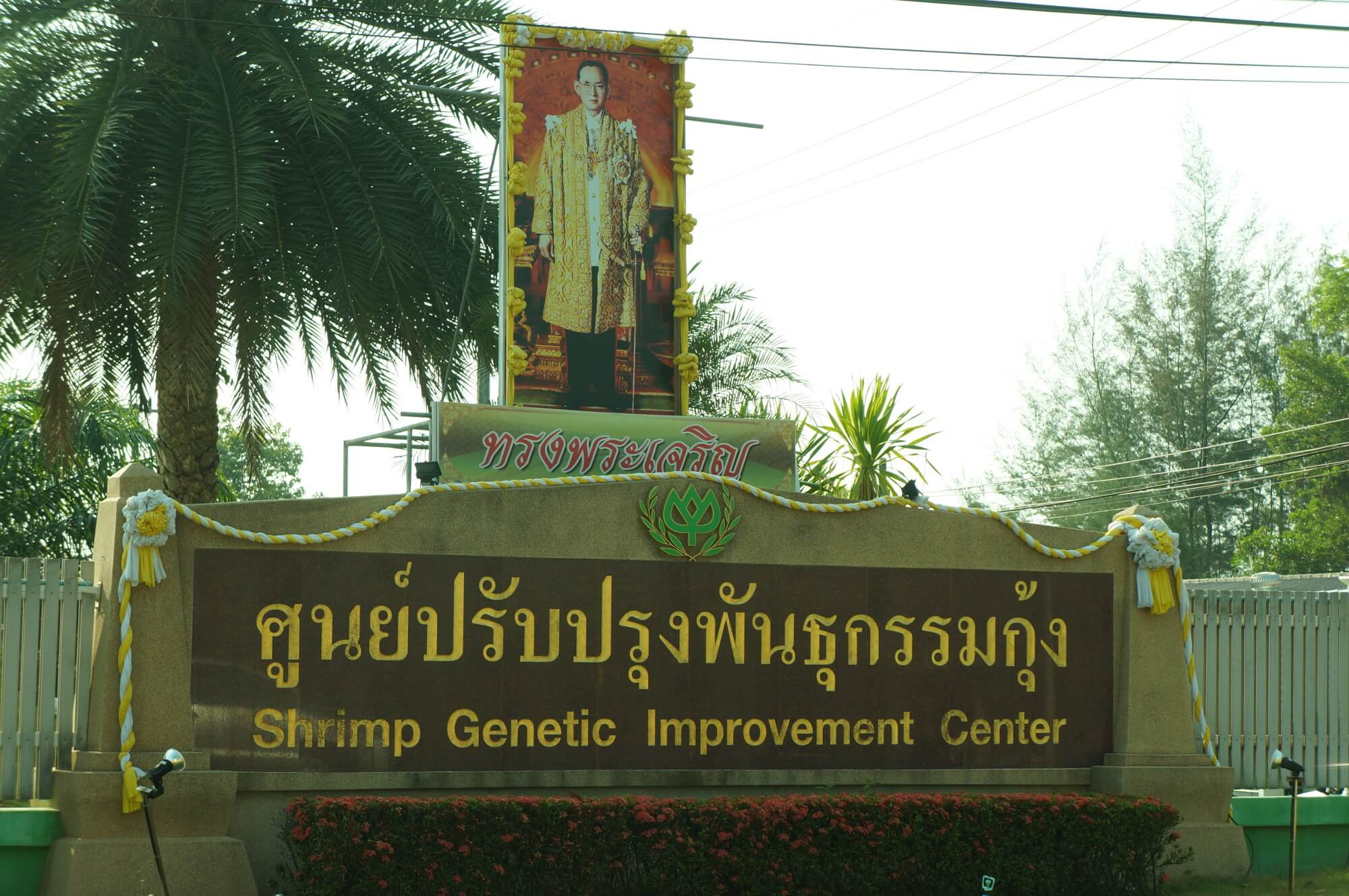 shrimp-genetic