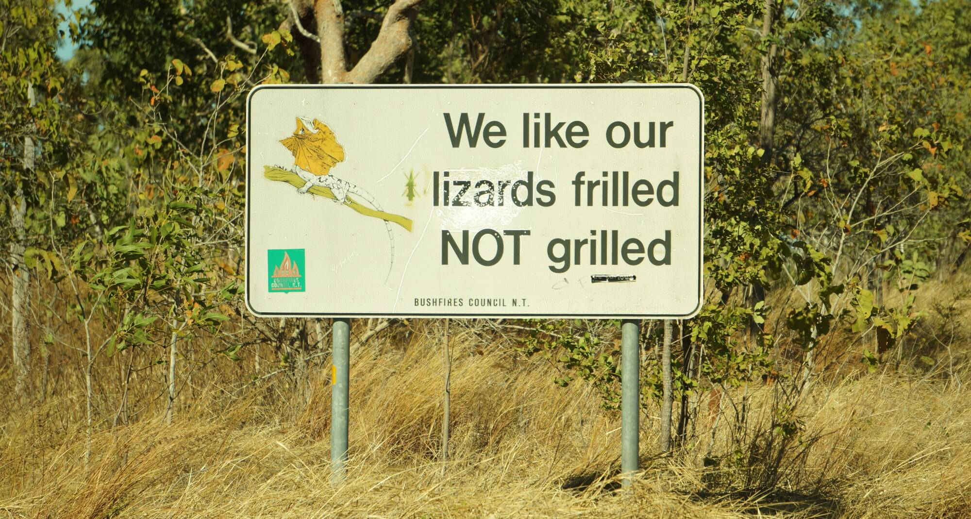 australia-outback-lizard