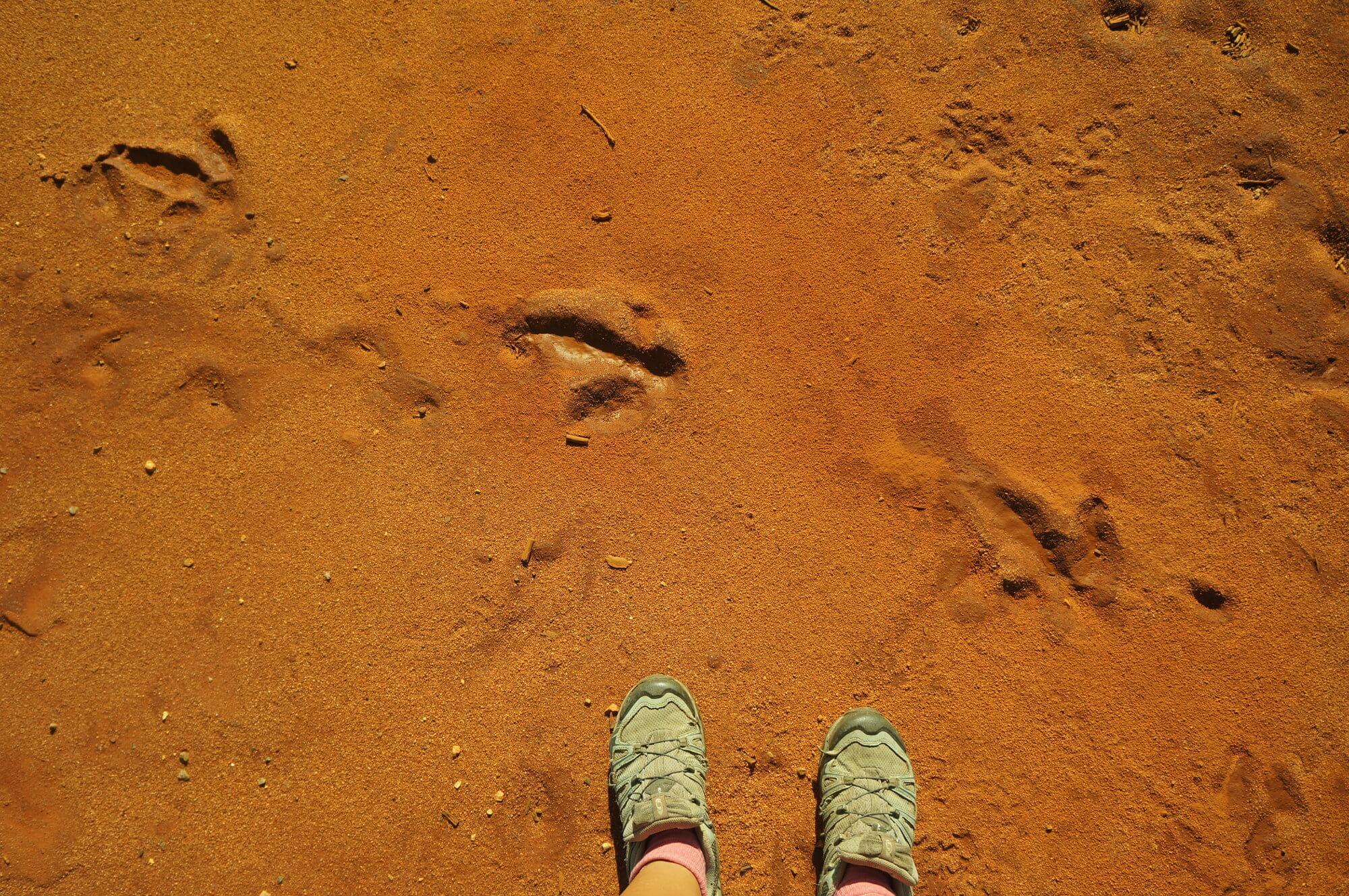 australia-outback-slady-emu-czerwona-ziemia
