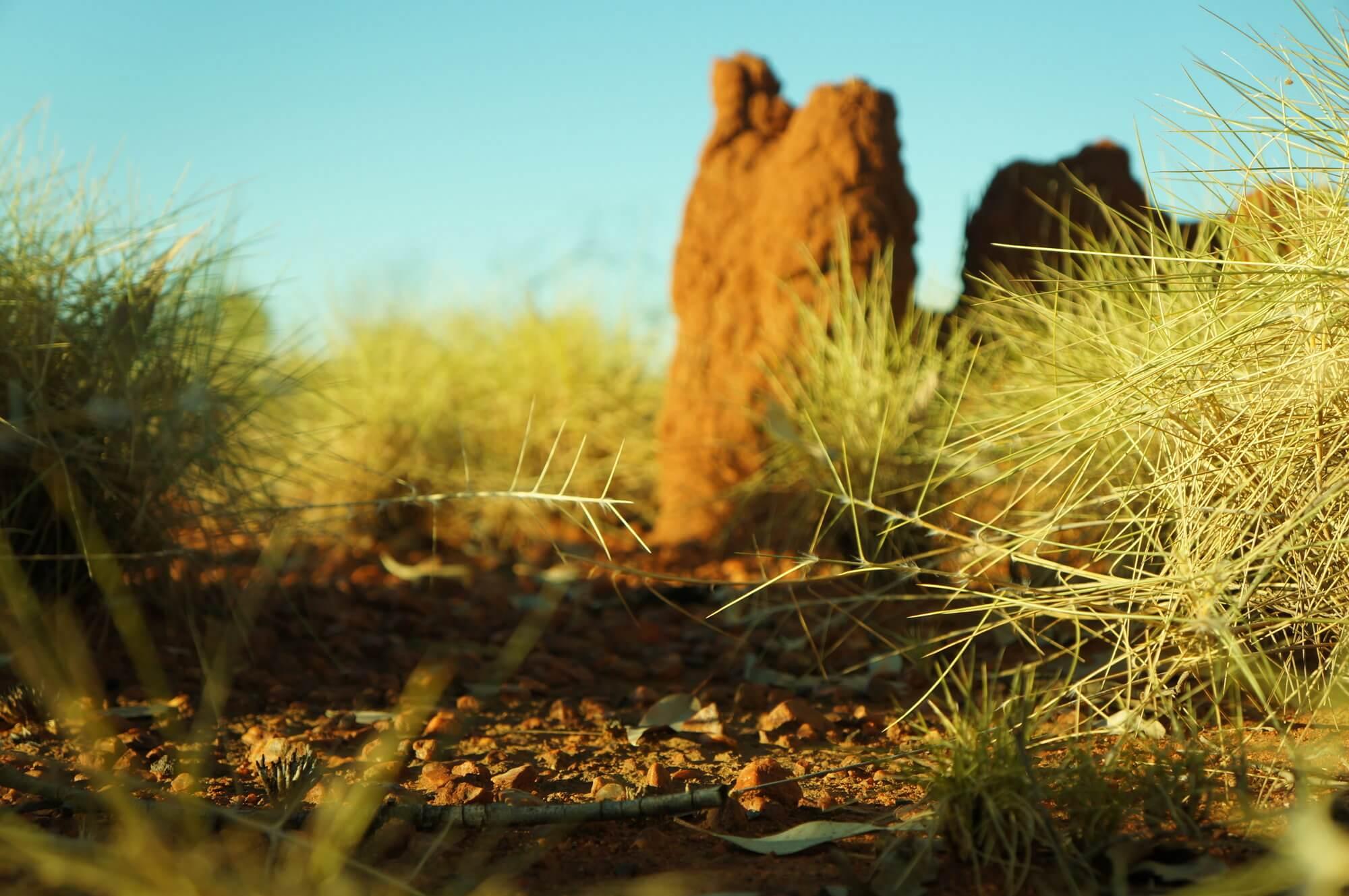 australia-przyroda-outback-3