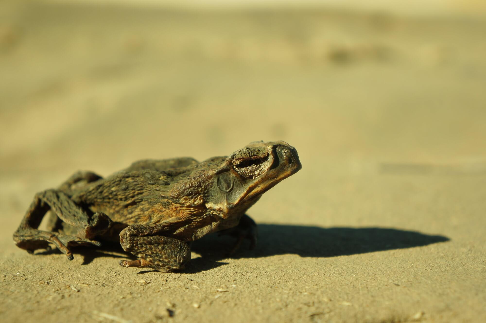 australia-przyroda-outback-6