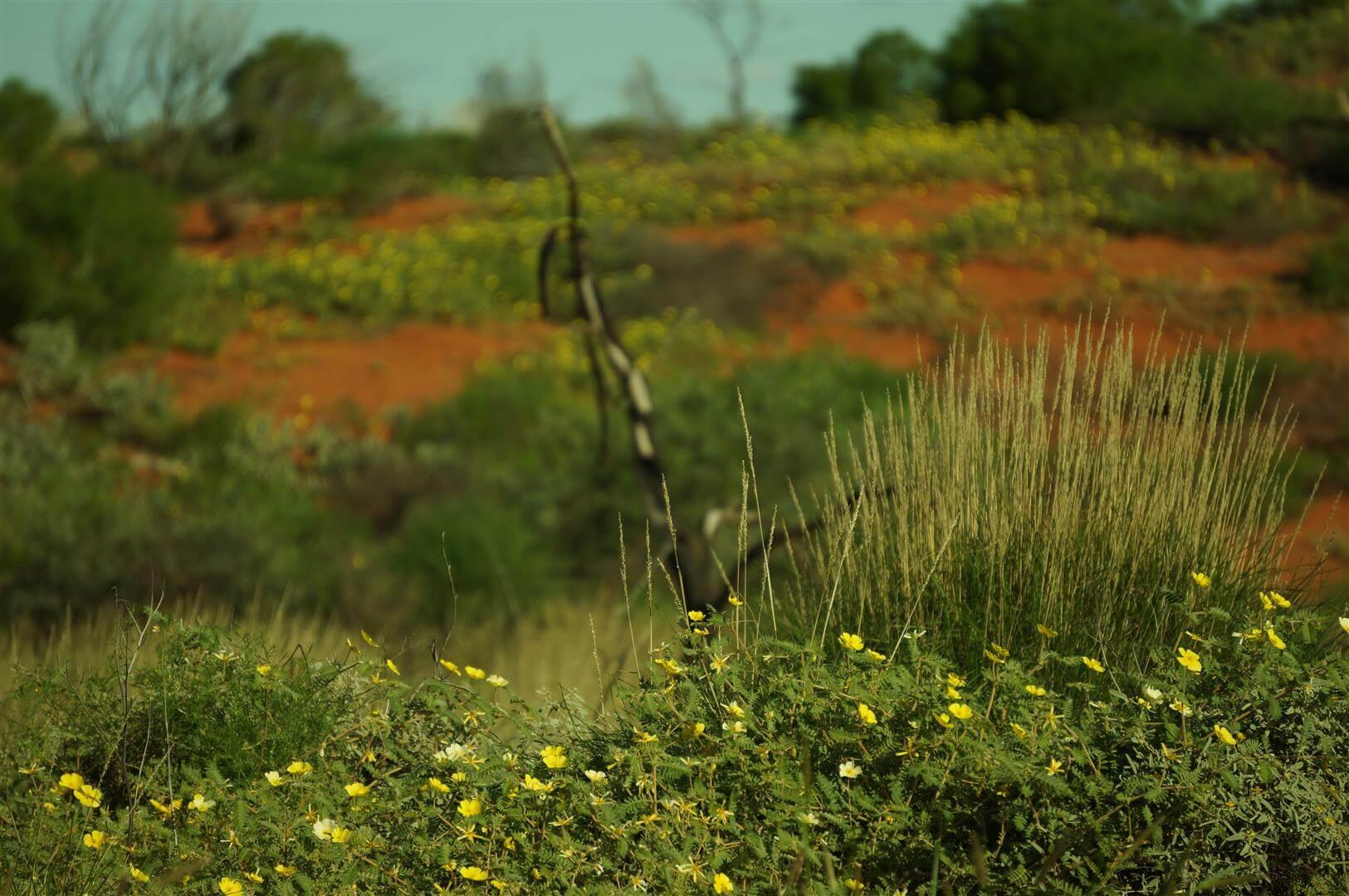 outback-australia-zachodnia-czerwono-zielona