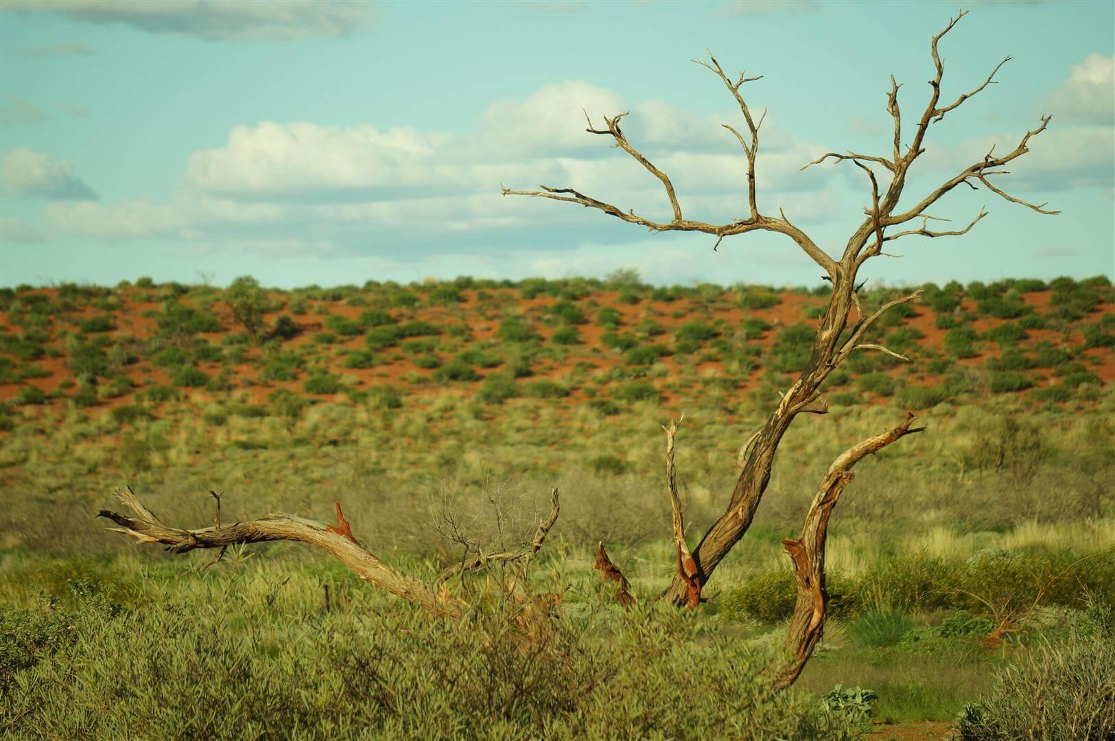outback-australia-zachodnia