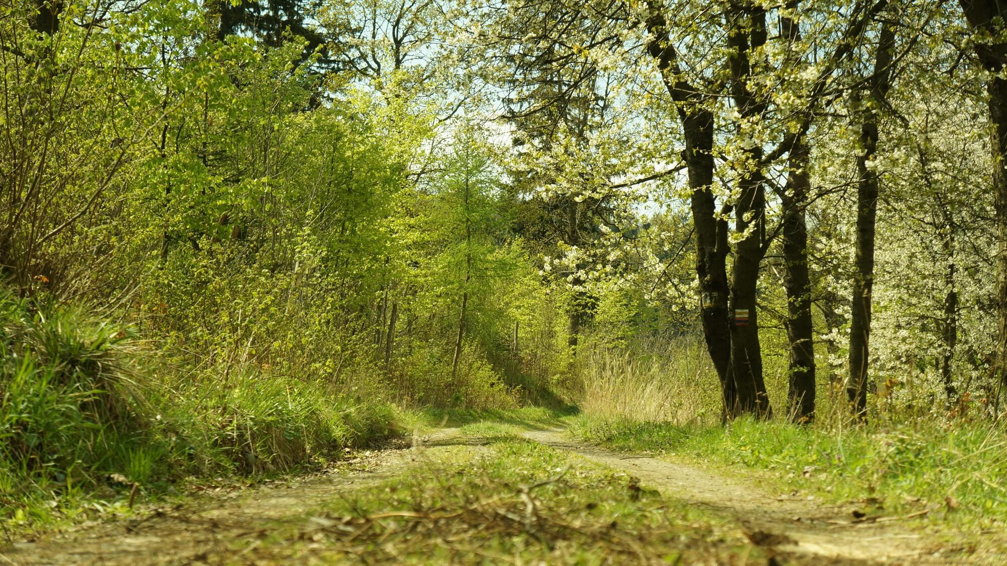 gory-sowie-rowerem-na-weekend-20