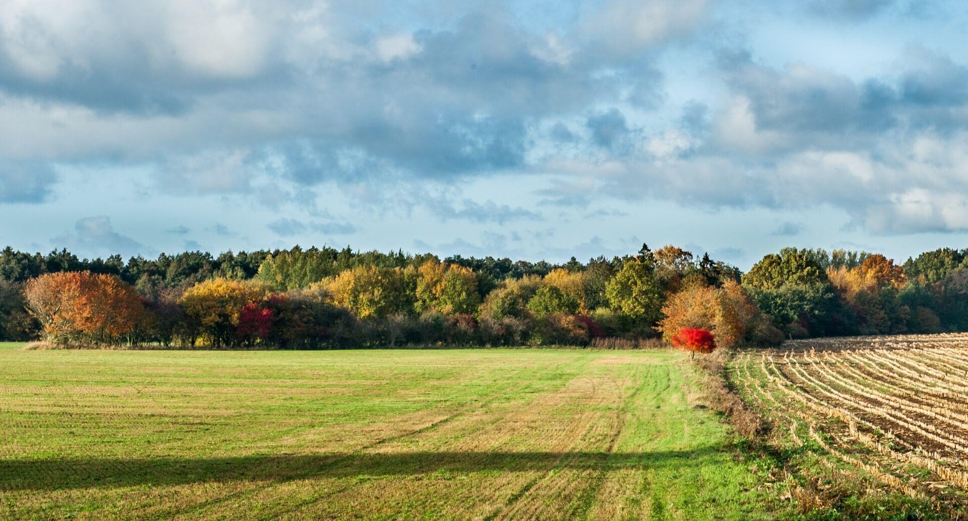 kaszuby-czerwone-drzewo-jesien