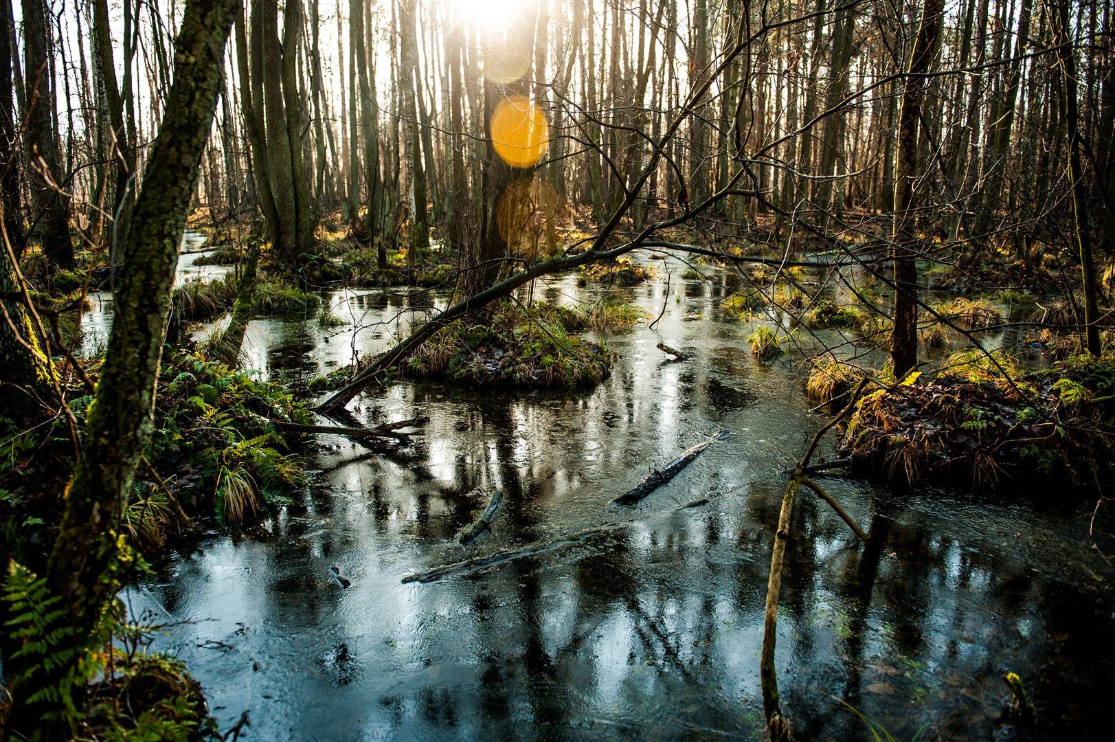 bolimowski-park-krajobrazowy-rzeka-rawka-bagnisko-1