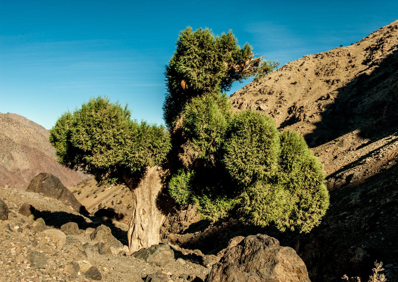 maroko-antyatlas-trekking-marrakesz-14
